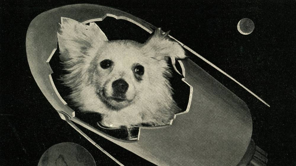 soviet-space-dogs-1455897629